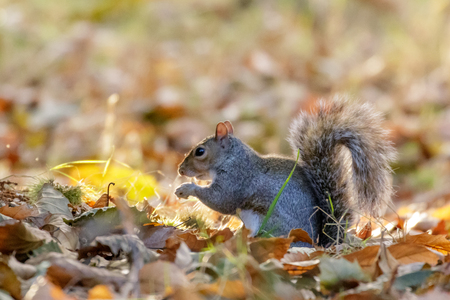5 Nuts to Gather This CRE Fall Season
